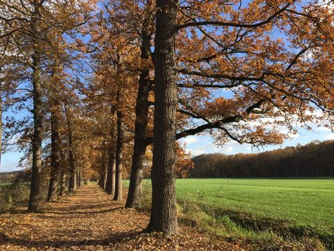 Bos, Nederland