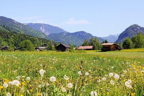 Oostenrijk, Alpenweide, Alm