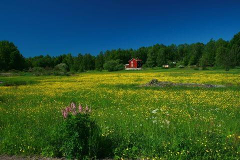 Zweden, weide