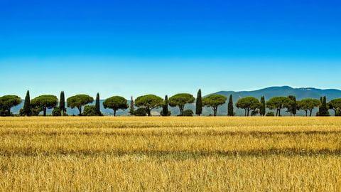 Toscane, cypressen