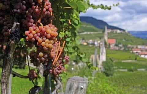 Merano, Italie, Zuid Tirol, wijnranken, wijn, druif