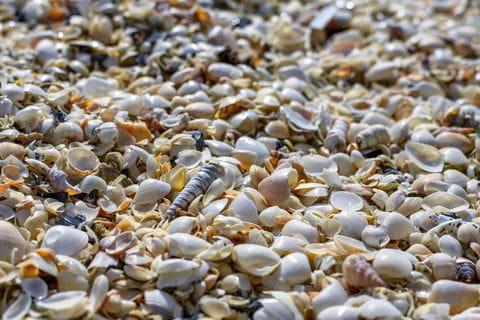 schelpen, strand