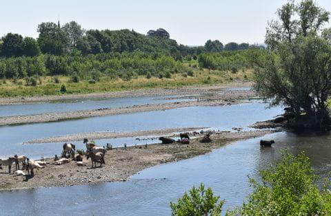 Limburg, Maas