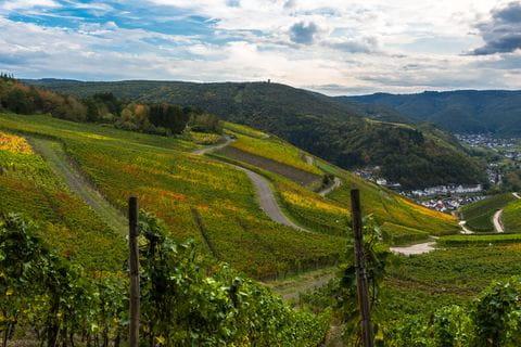 Wijnranken, wijnvelden, Eifel, Duitsland