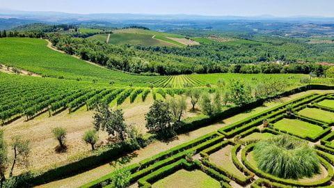 Chianti, wijnranken, wijnvelden, Toscane, Italie