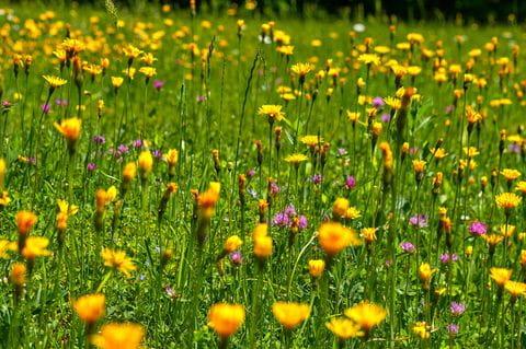 Bergen, bloemen