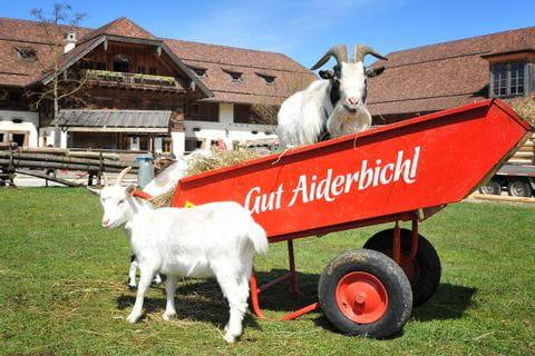 Salzburgerland, Gut Aiderbichl, Oostenrijk
