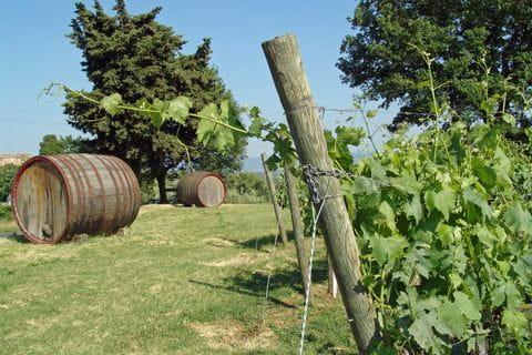 wijnranken en vat