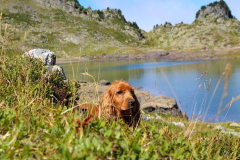 Hond, wandelen met de hond, bergmeer