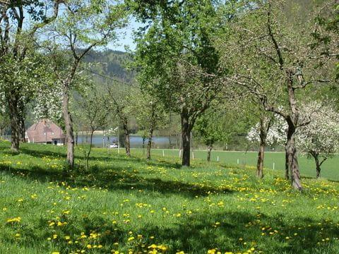 Donau radweg bloesem